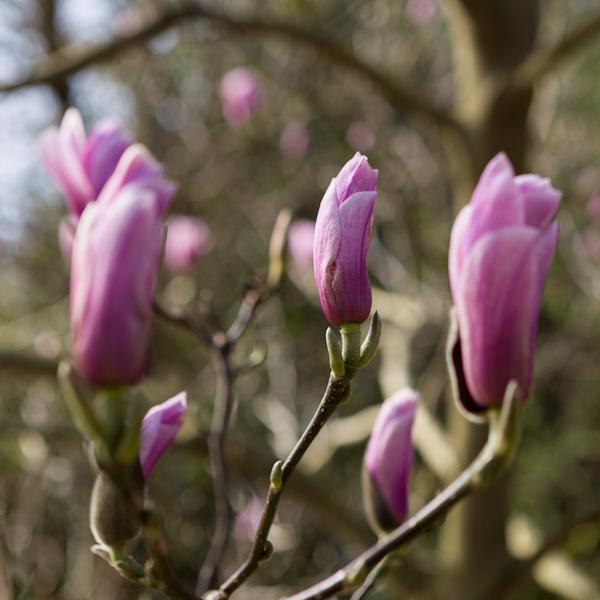 Flower Power For The Spring Garden Janet Bligh
