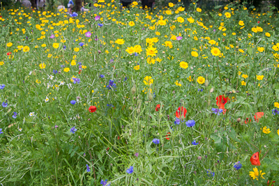 Pictorial meadow