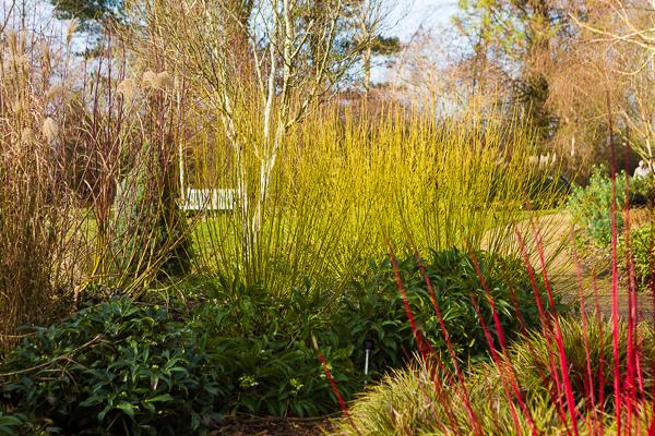 Sir Harold Hillier Gardens/firgrovephotographic.co.uk