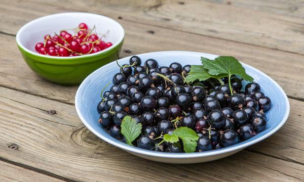 redcurrants blackcurrants