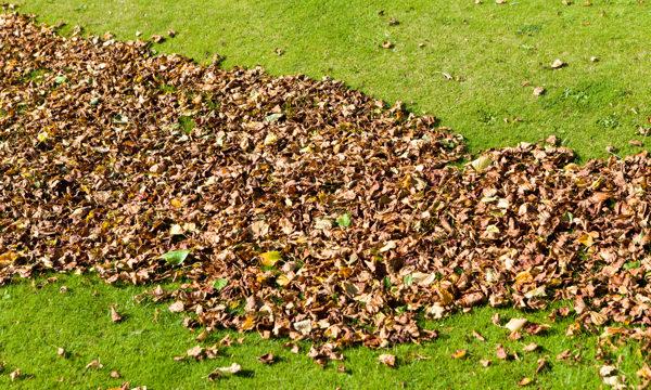 rake up leaves