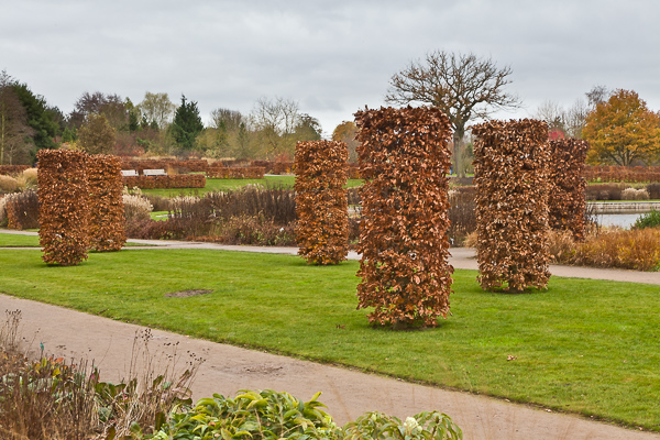 Beech columns and hedges at RHS Wisley