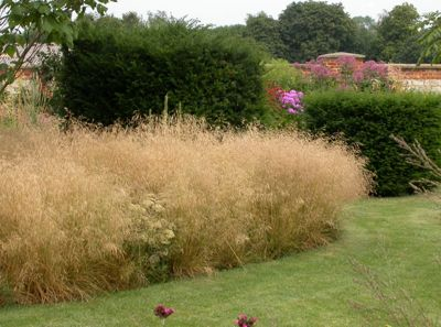 deschampsia-cespitosa-goldtau