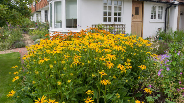 FINISHED GARDEN Rudbeckia