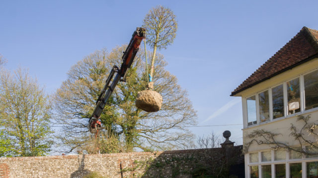 PLANTING rootball trees craned in to position