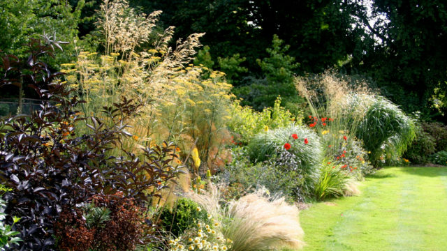 ornamental grasses