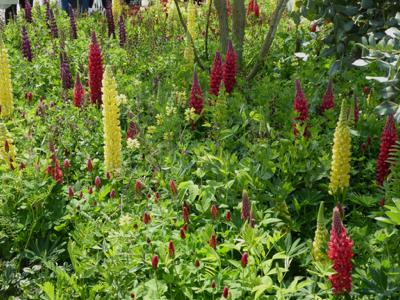 seedlip planting