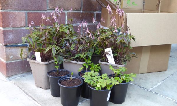 buy plants online mail order