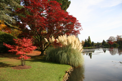 pampas grass lake sheffield park gardens